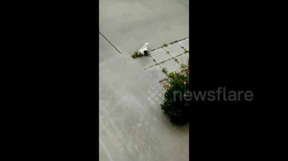 Newsflare - Newsflare Edit - Tarantula in my shoe!Absolute