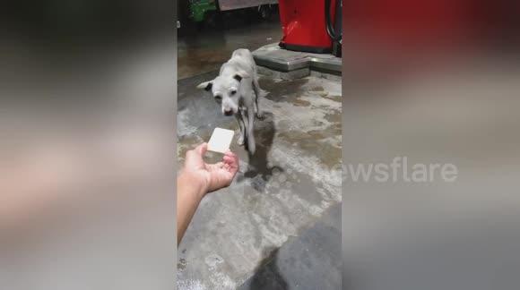 Newsflare - Shedding Fake Dog