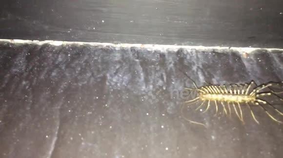 Newsflare - Centipede
