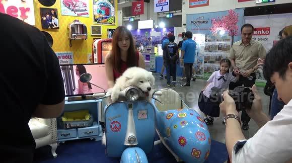 Newsflare - White Samoyed Dogs On Blue Vespa Scooter