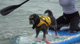 Newsflare - UK's first dog surfing championships takes place