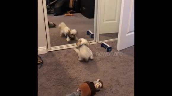 Newsflare - Xam playing with the dog in the mirror