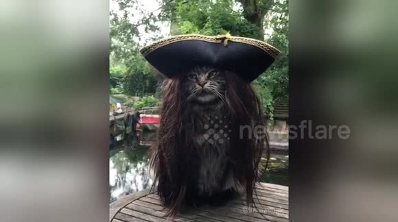 Newsflare - Captain Jack Purr-ow: Most majestic pirate ever
