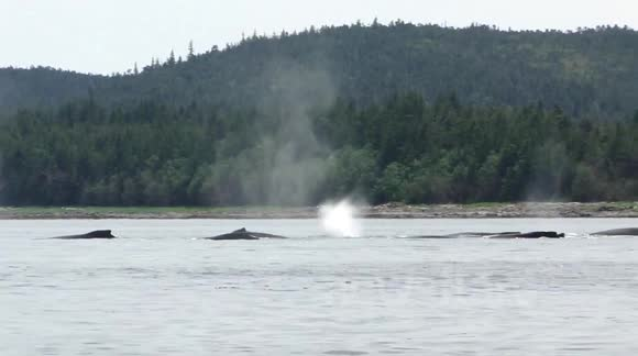 Whale Watching with Capt Jayleen, Harv and Marv's Outback Alaska