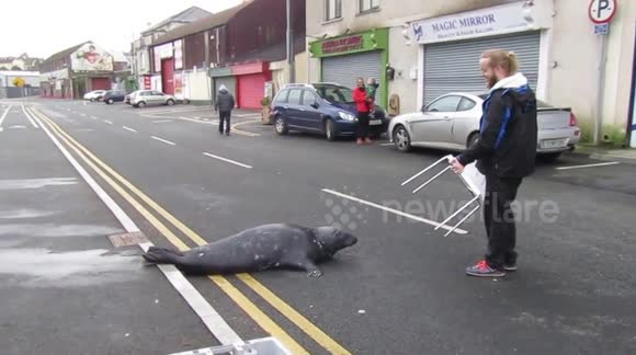 Newsflare - Sammy the Seal heads for some cod on Fish and