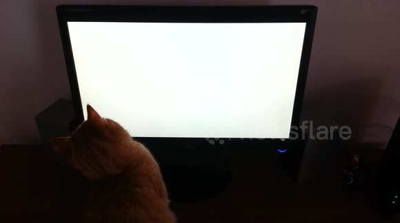 Cat plays with a virtual mouse