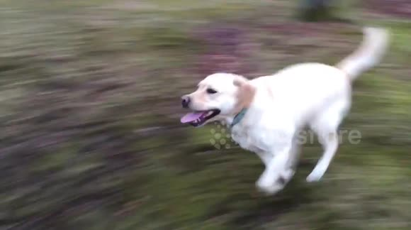 Dog plays outside for the first time in 11 weeks after recovering from nasty injury