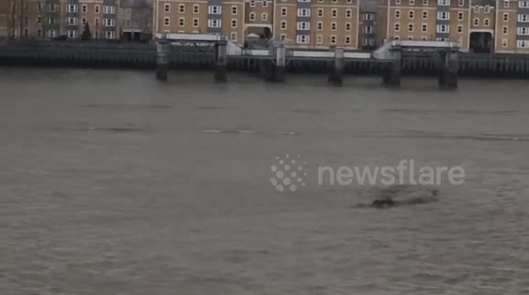 Second alleged sighting of mysterious Thames 'creature'
