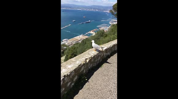 Seagull take off in slow motion.
