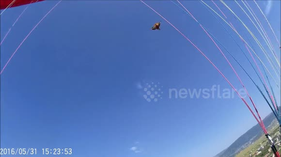 Newsflare - Eagle attacks paraglider over Turkish mountains