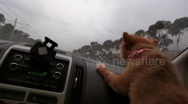 Newsflare - Dog with short legs tries to climb into car