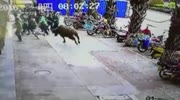 Buffalo on the loose in Chinese city