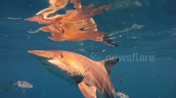 Close encounter with blacktip sharks in Florida