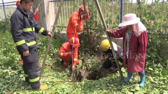 Firefighters rescue 200 kg buffalo from well