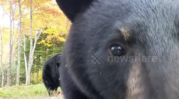 Curious bear 'attacks' photographer's camera
