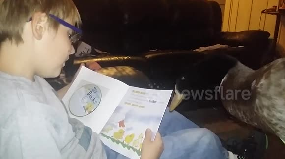 Boy reads story about ducks to pet duck