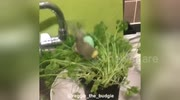 Newsflare Edit - Birds having a bath in the parsley