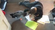 Nibbles the pet duck helps owner with homework