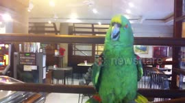 Newsflare - Popcorn the Quaker Parrot talking to Kelly the dog